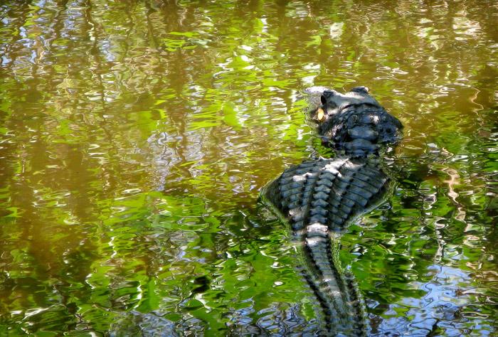 Everglades | Andrew Craft