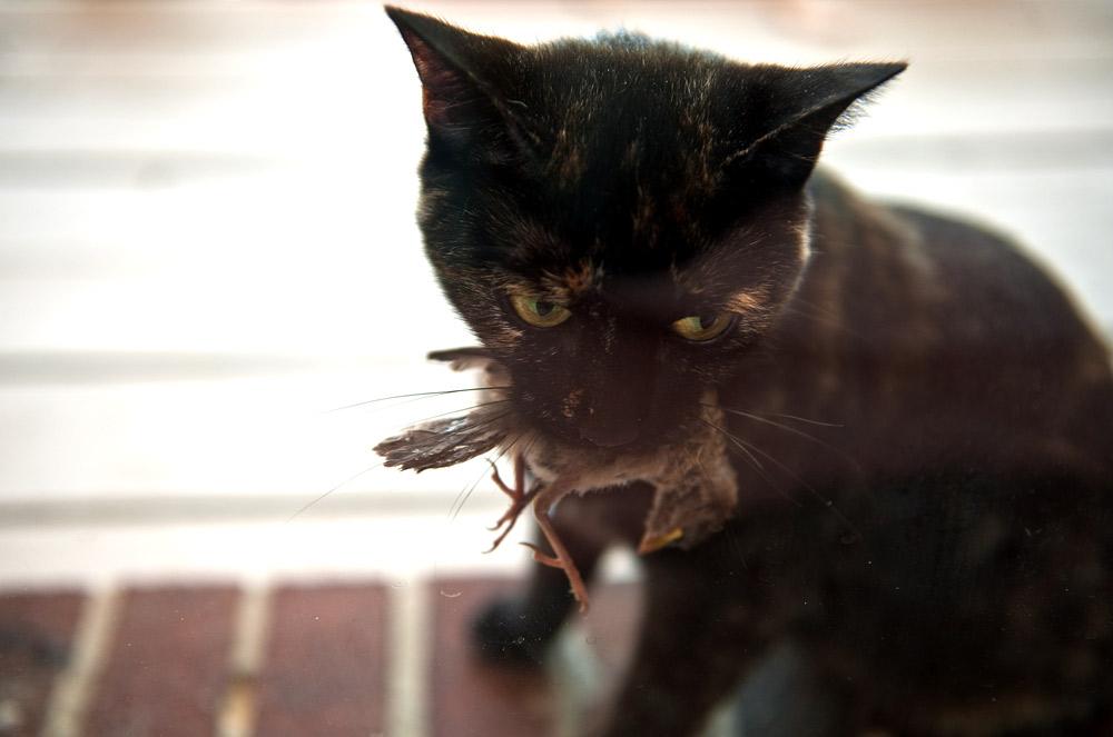ATTACK CAT | Andrew Craft